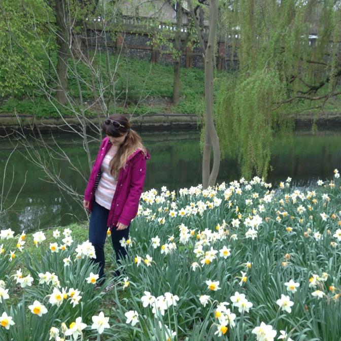 All the daffodils! (Photo Cred: Moles)